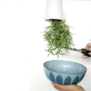 Sky Planter easy way to get fresh herbs