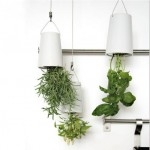 Sky Planter easy way to get fresh herbs in your kitchen from Boskke
